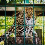 Gradini zoologice deosebite pe care le poti vizita oricand doresti